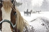 Livestock in Winter weather